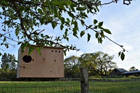 Sonoma County Owl Boxes